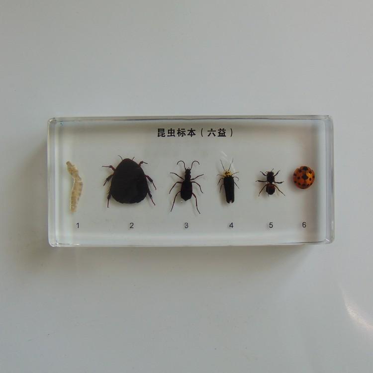 昆虫betway体育iso系统(六益)