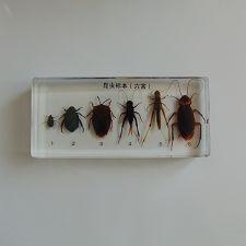 昆虫betway体育iso系统(六害)